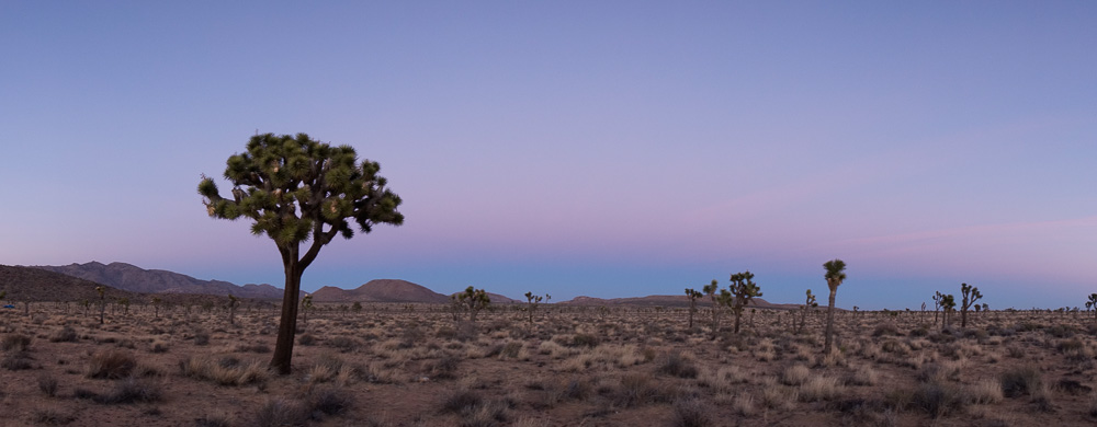 Joshua Tree Panorama by Anne McKinnell