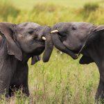 Top 10 Wildlife Photos of 2014