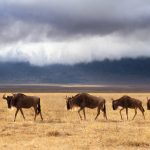 Wildlife Photography in Ngorongoro Crater, Tanzania