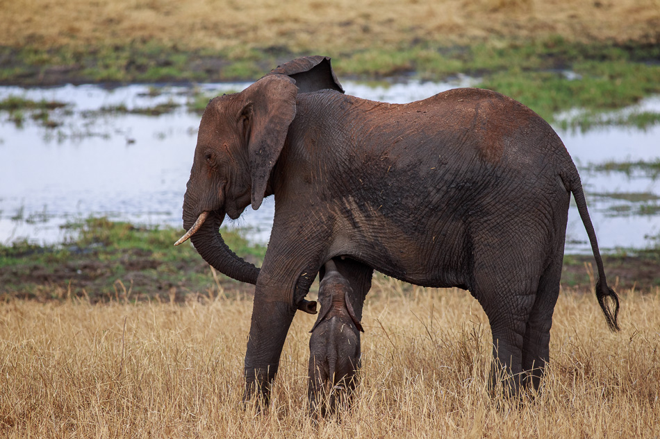 Elephant with Baby by Anne McKinnell