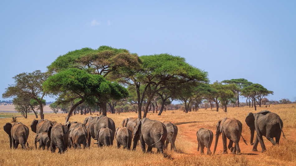 Elephant Herd by Anne McKinnell