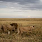 Wildlife Photography in Serengeti National Park, Tanzania – Part 1