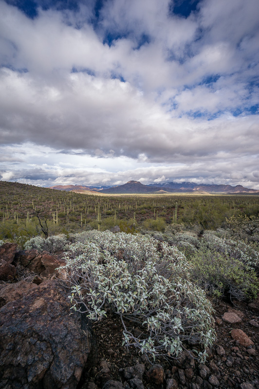 Organ Pipe Cactus National Monument Arizona by Anne McKinnell