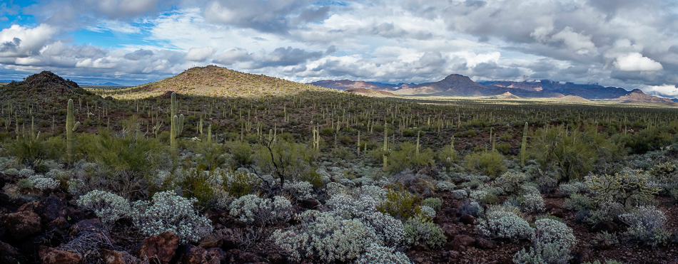Organ Pipe Cactus National Monument Arizona Panorama by Anne McKinnell