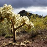 Photography at Organ Pipe Cactus National Monument
