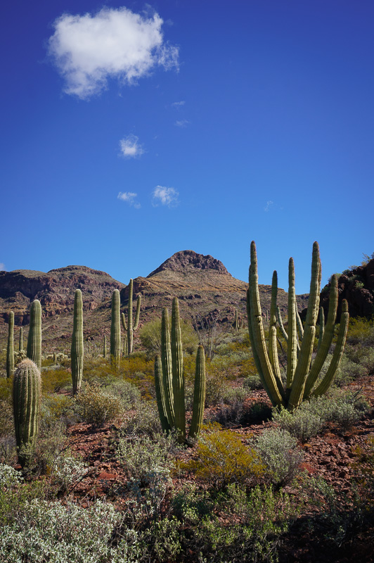 Vista at Organ Pipe Cactus National Monument by Anne McKinnell