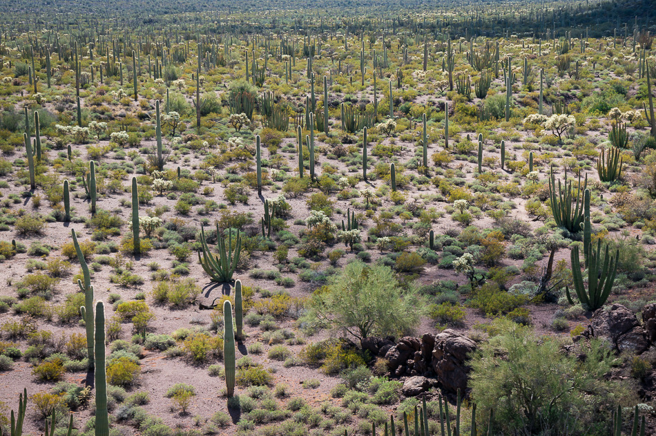 Cactus Forest by Anne McKinnell