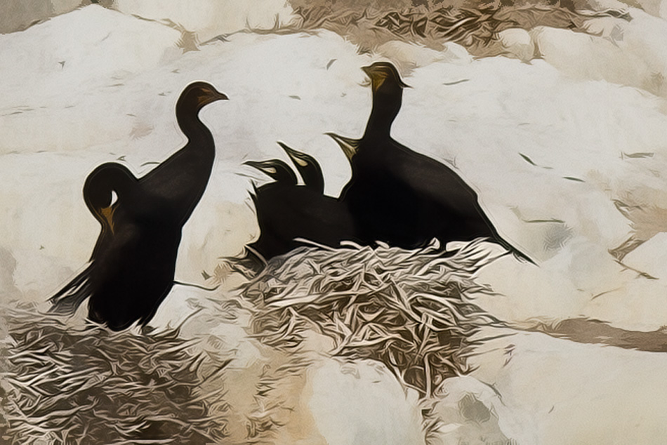 Nesting Cormorants Abstract by Anne McKinnell