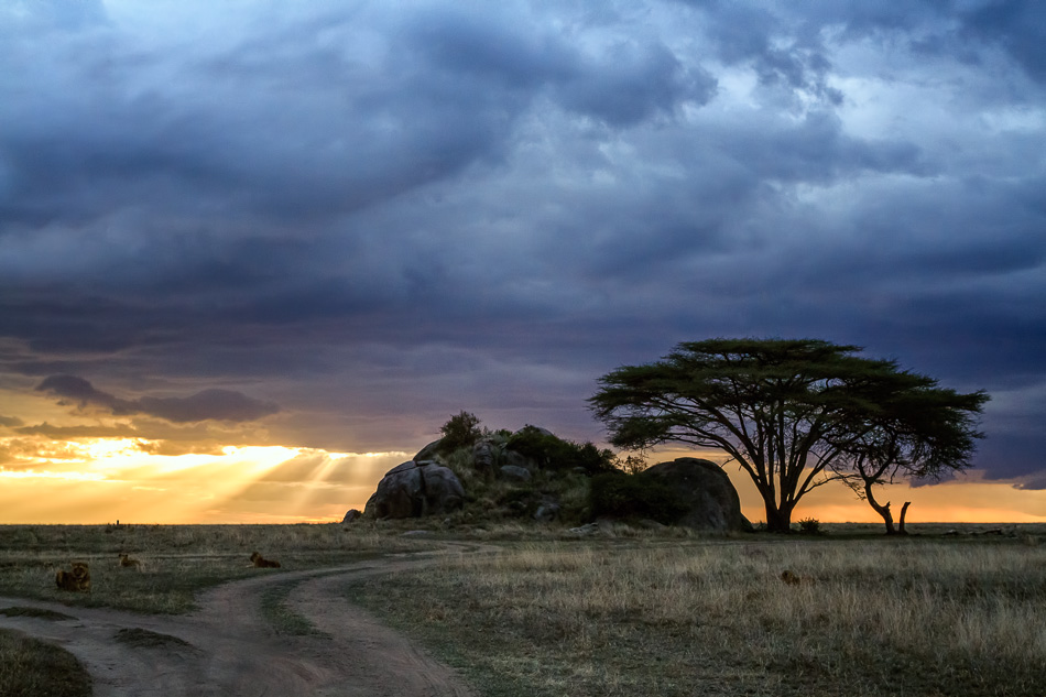Acacia Tree and Kopje by Anne McKinnell