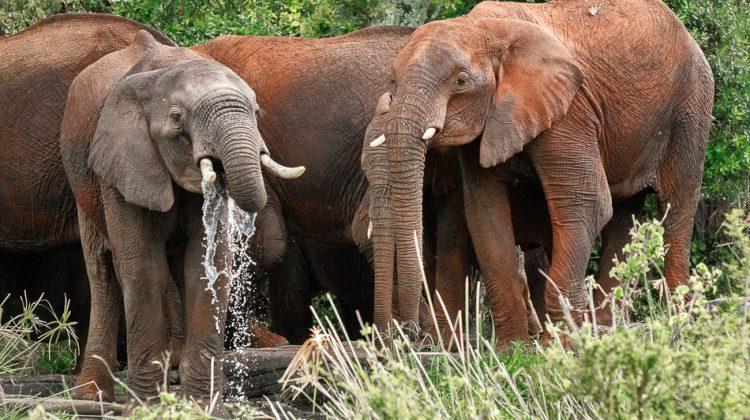 Serengeti Elephants by Anne McKinnell
