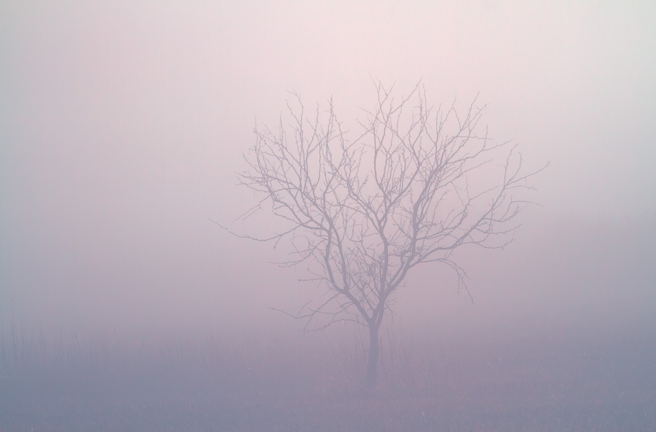Tree in the Fog by Anne McKinnell