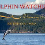 Video: Dolphin Watching in Discovery Passage, British Columbia