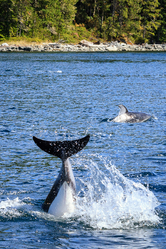 Dolphin Tail by Anne McKinnell