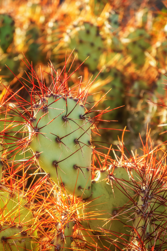 Prickly Pear Cactus by Anne McKinnell