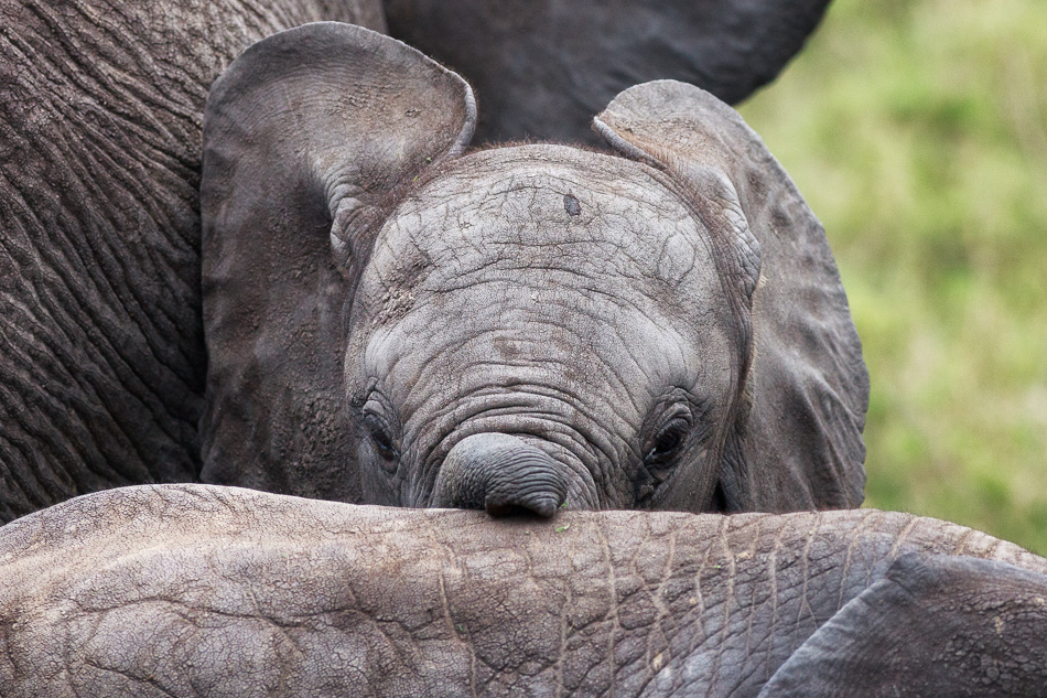 Baby Elephant Sees Me by Anne McKinnell