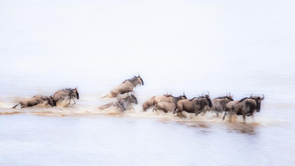 Wildebeest Abstract by Anne McKinnell