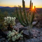 Sunburst at Organ Pipe Cactus National Monument