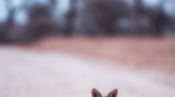 Jackal by Anne McKinnell