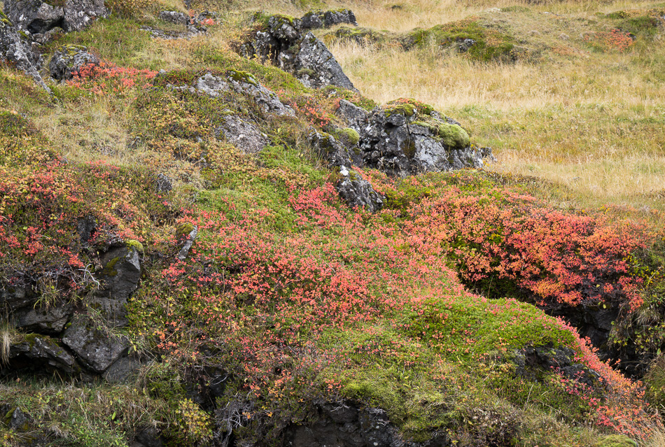 Lava in Budir by Anne McKinnell