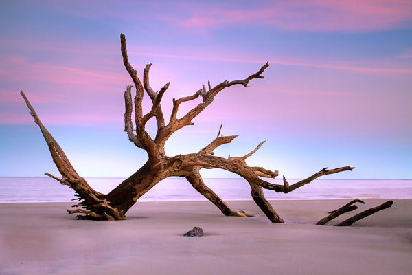 Driftwood Beach, Georgia, by Anne McKinnell