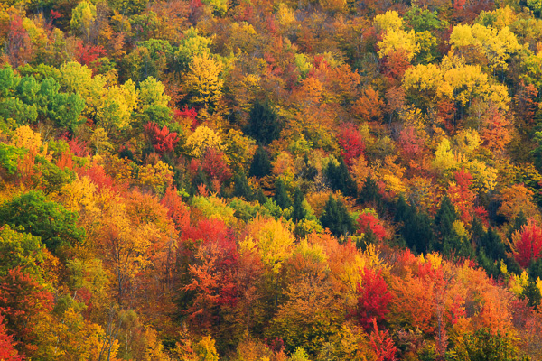 Fall in New Hampshire by Anne McKinnell