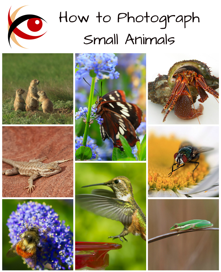 Welcome to my new blog series: great subjects! First lesson: photographing small animals. http://annemckinnell.com #photography #animals
