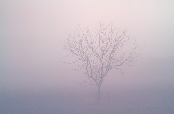 Tree in the Fog, Arizona