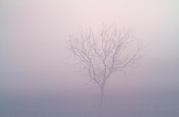 Tree in the Fog, Arizona
