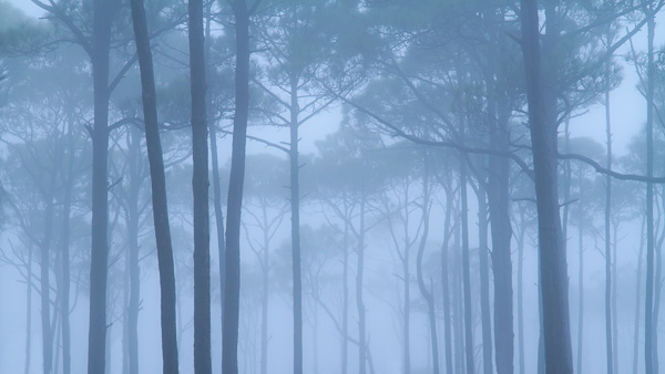 Fog in the trees at Port St. Joe, Florida by Anne McKinnell