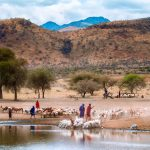 Maasai people herding goats in Tanzania, Africa by Anne McKinnell