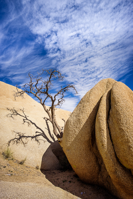 Tree amongst the rocks at Joshua Tree National Park, California by Anne McKinnell