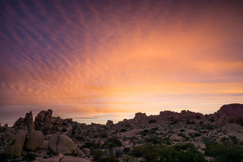 Sunset at Joshua Tree National Park, California by Anne McKinnell