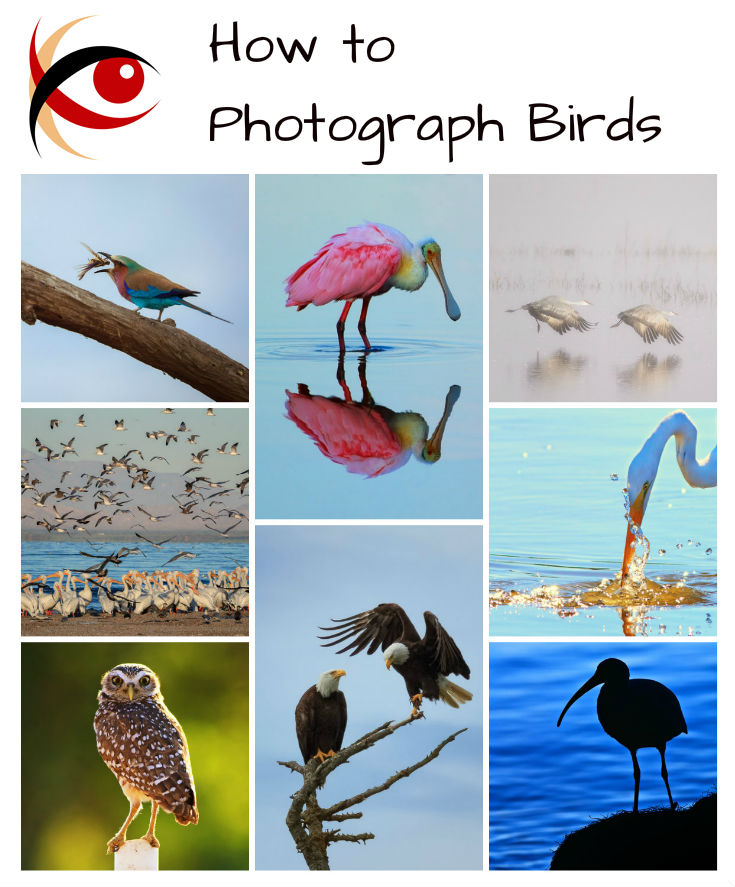 Great Subjects: How to Photograph Birds - tips for making memorable photographs of our feathered friends. http://annemckinnell.com #photography #tutorial