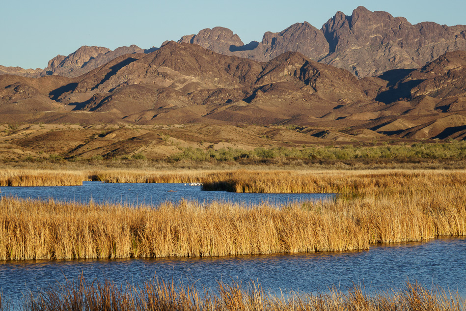 Cibola National Wildlife Refuge, Arizona