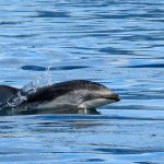 Reasons to Love Vancouver Island in Summer: #4 Dolphins