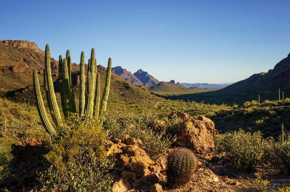 Organ Pipe Cactus National Monument, Arizona