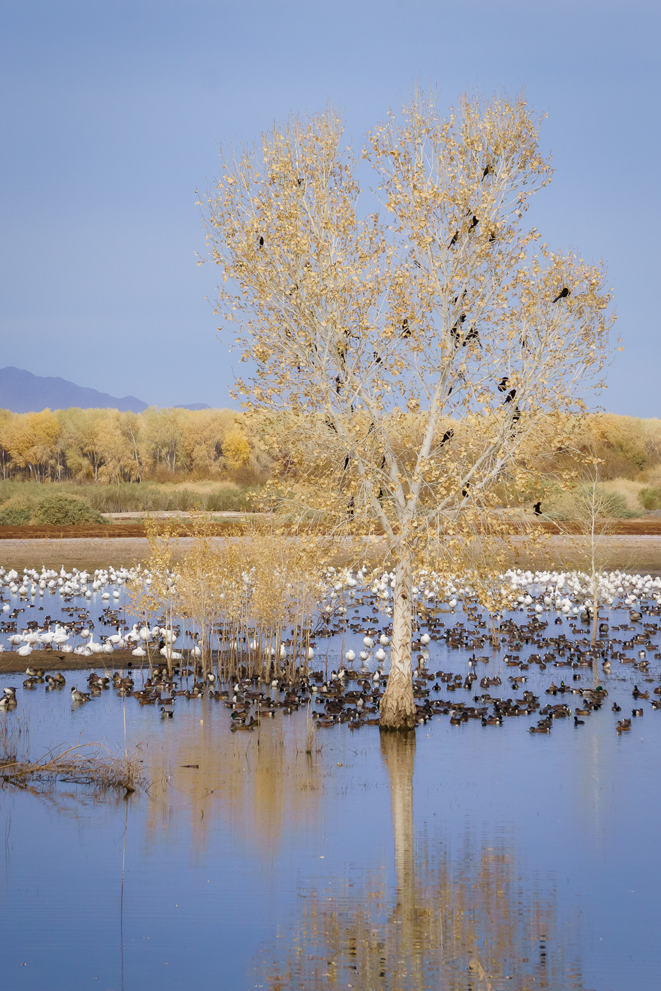 Cibola National Wildlife Refuge, Arizona