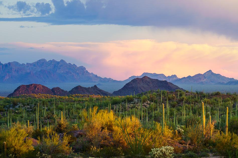 Ajo scenic drive, near Organ Pipe National Monument, Arizona