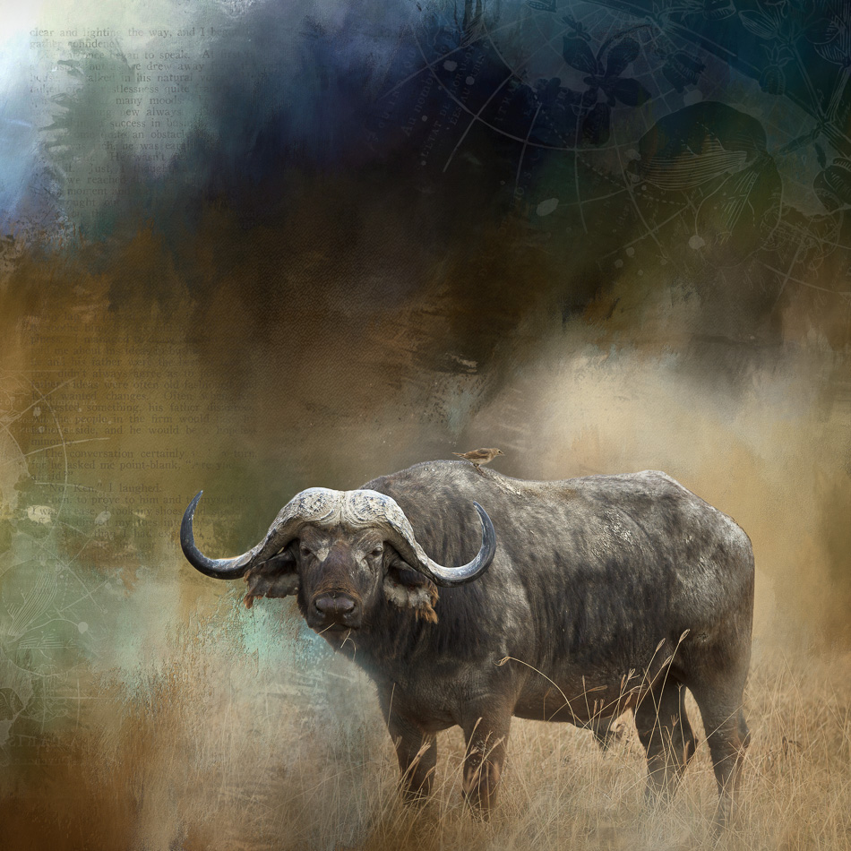 Cape Buffalo Digital Art