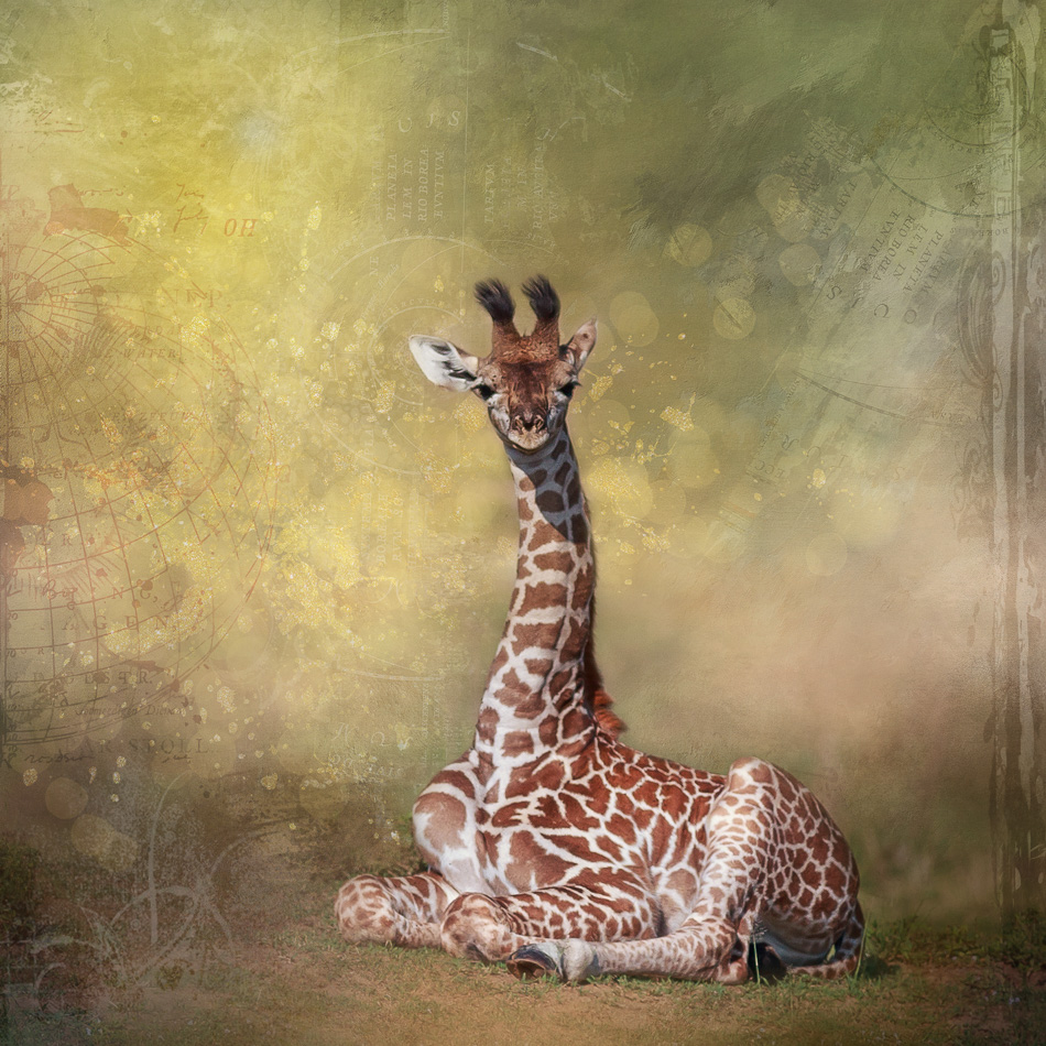 Baby Giraffe Digital Art